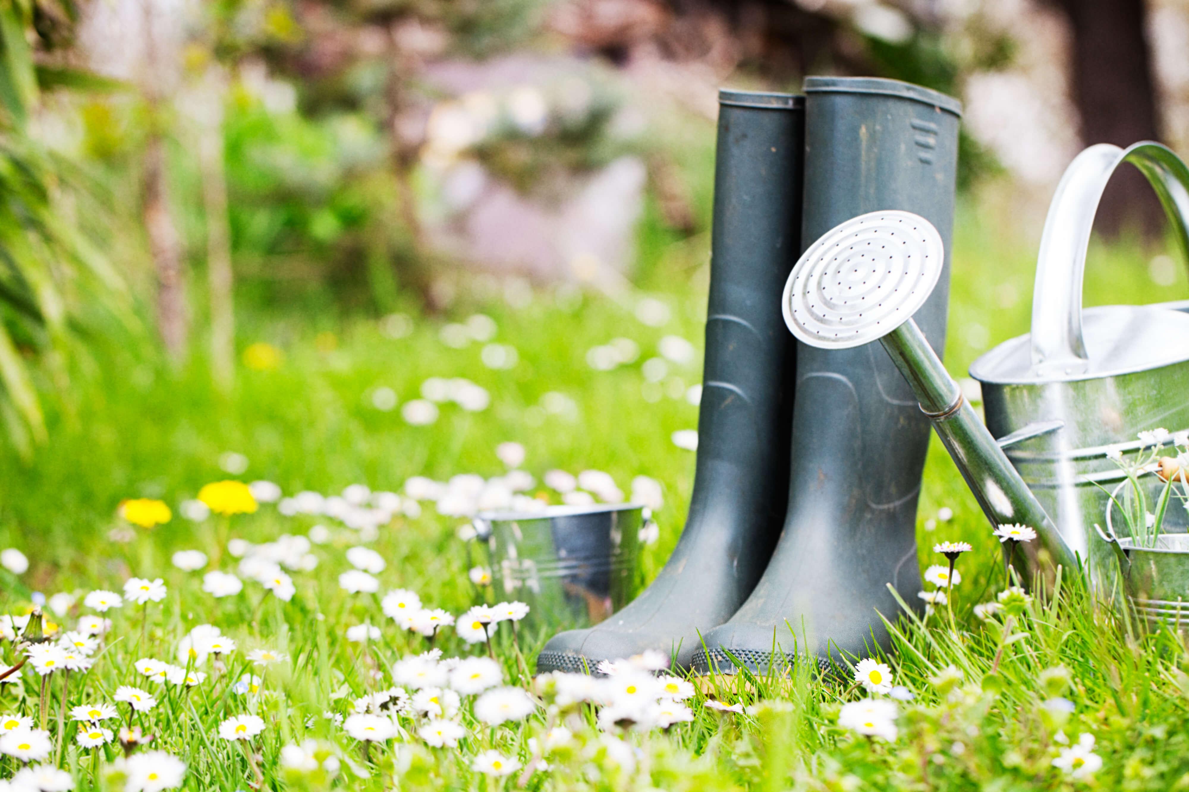 Hausfeen Gartenarbeit